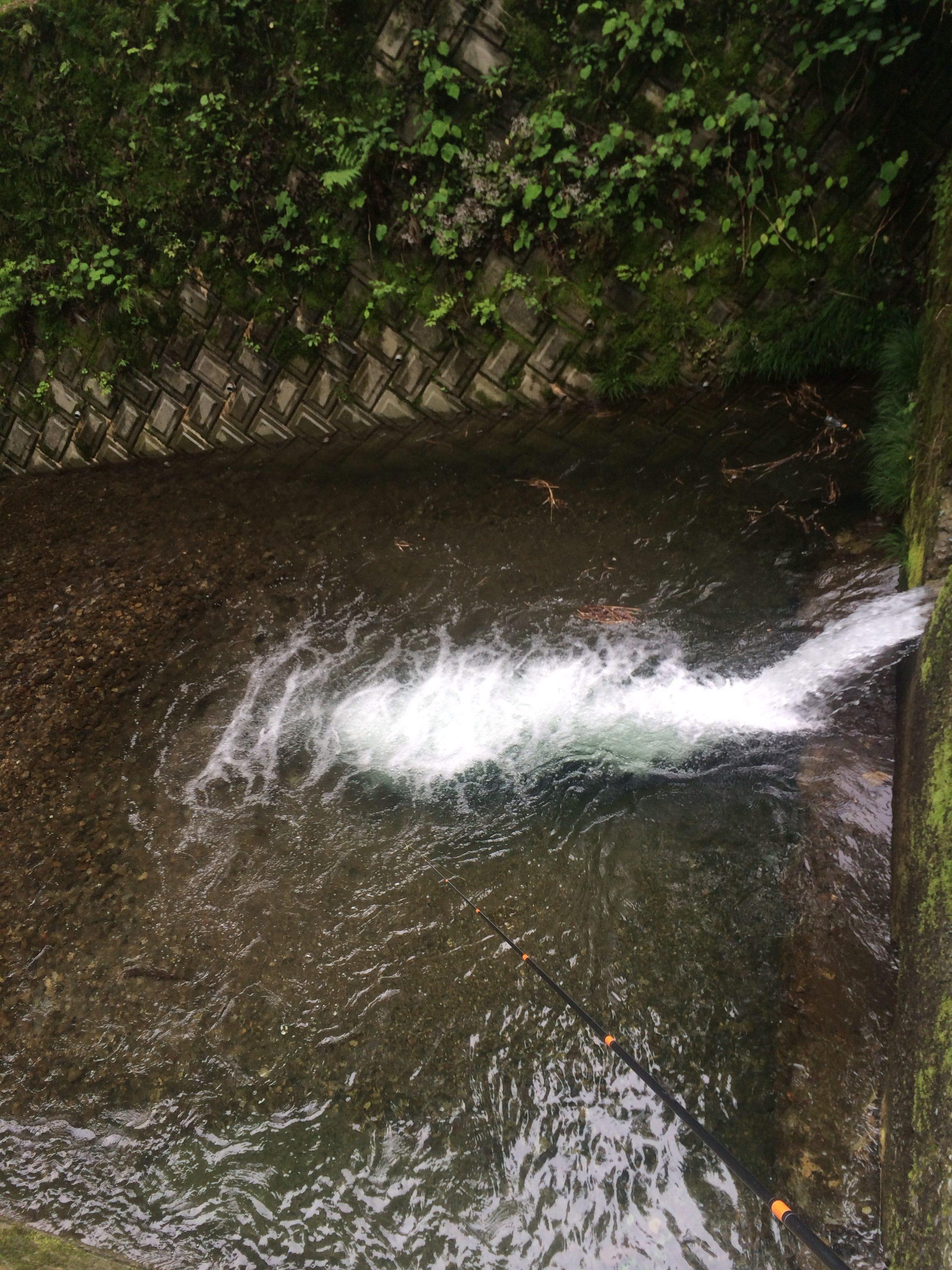 8月6日 新潟県 姫川、早川 ... - 尾崎渚のブログ